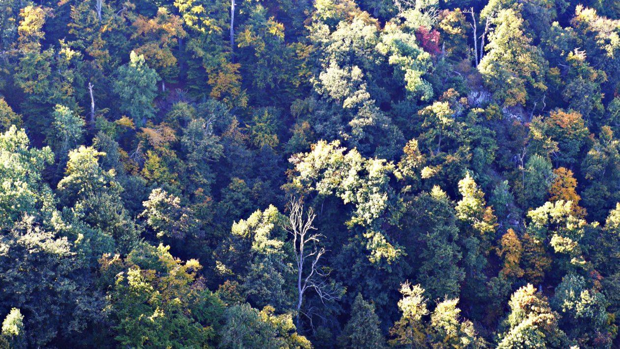 Blick auf herbstlich gefärbte Bäume im Bodetal