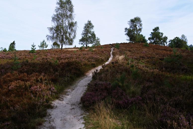 Schmaler Pfad hoch zu einem Hügel in der Lüneburger Heide