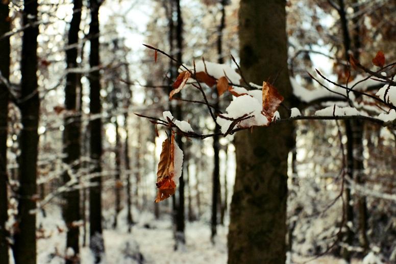 Verschneite Landschaft am Wurmberg im Harz