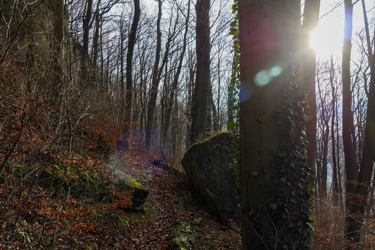 Sonnenschein auf dem Klippenweg im Ith